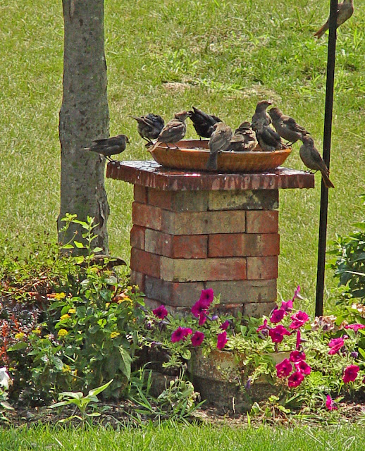 DIY Brick Ideas, Birdbaths