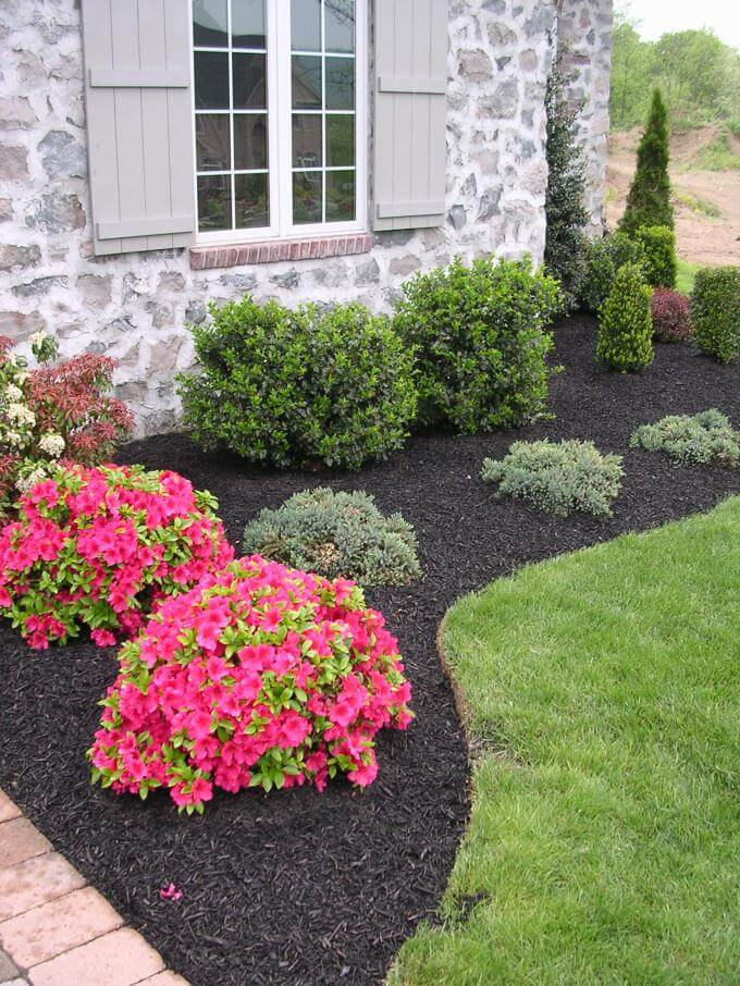 Evergreen Border With Beautiful Pink Color